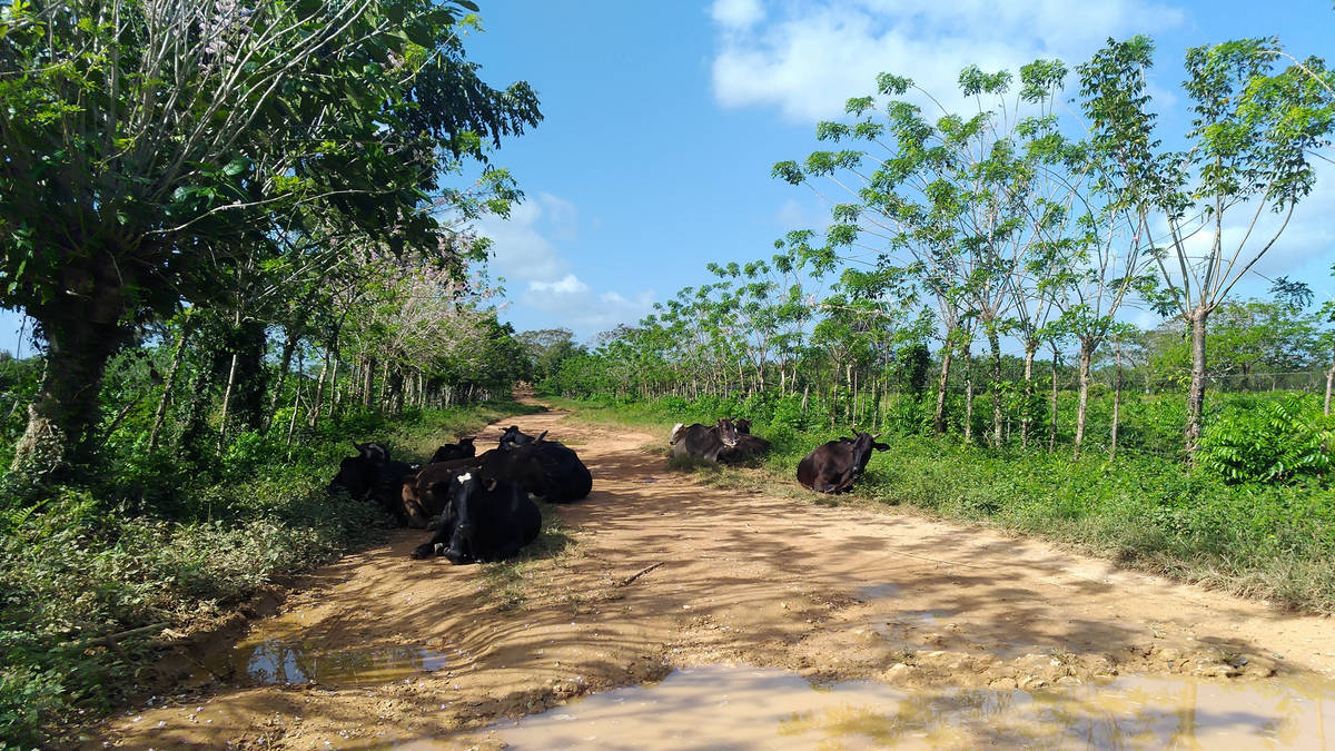 Discover delightful country life on amusing Xtreme-Buggy excursions in Punta Cana, Dominican Republic